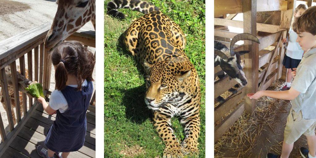 field trips zoo